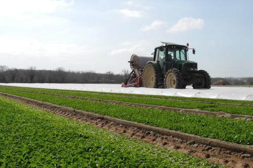 Rives de Loire engage un projet de rapprochement  avec l'activité légumes de Terrena