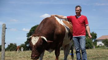 Vous êtes producteur de bovins ?